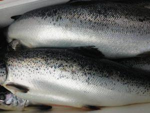 Địa chỉ bán cá hồi nhập khẩu uy tín không nên bỏ qua